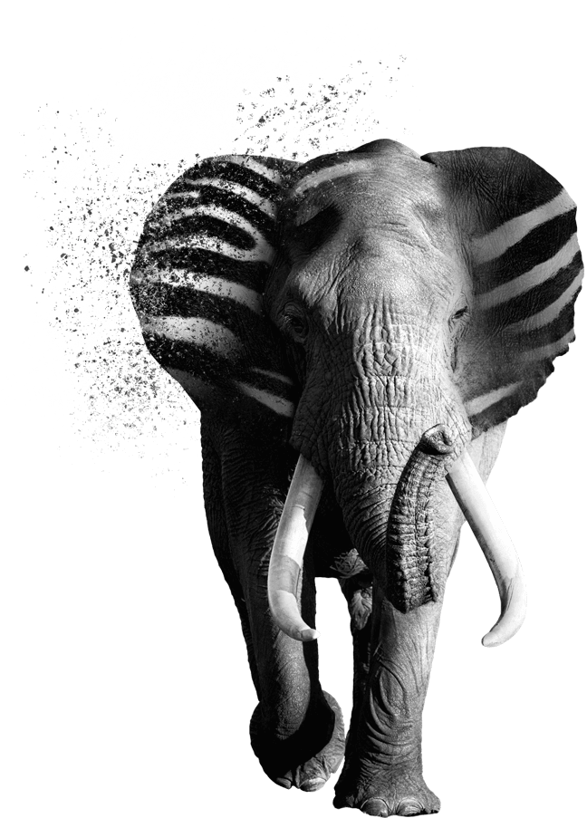 verycreative zebraphant